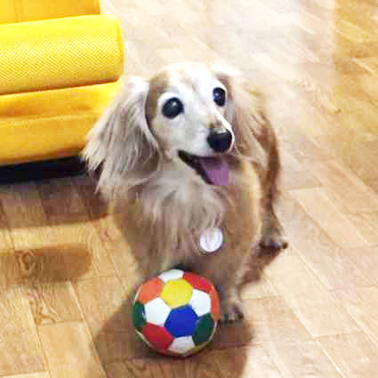 playing-with-ball