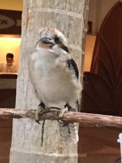 ホテルラウンジでいた鳥さん