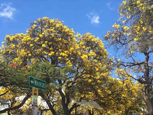 車窓から見た美しい木の花